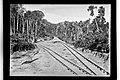 Trecho de Desvio de Linha da Ferrovia Madeira-Mamoré - 292, Acervo do Museu Paulista da USP.jpg