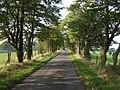 Tree-lined road, looking towards Loanhead - geograph.org.uk - 989622.jpg