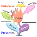 Tree of Living Organisms 2.png