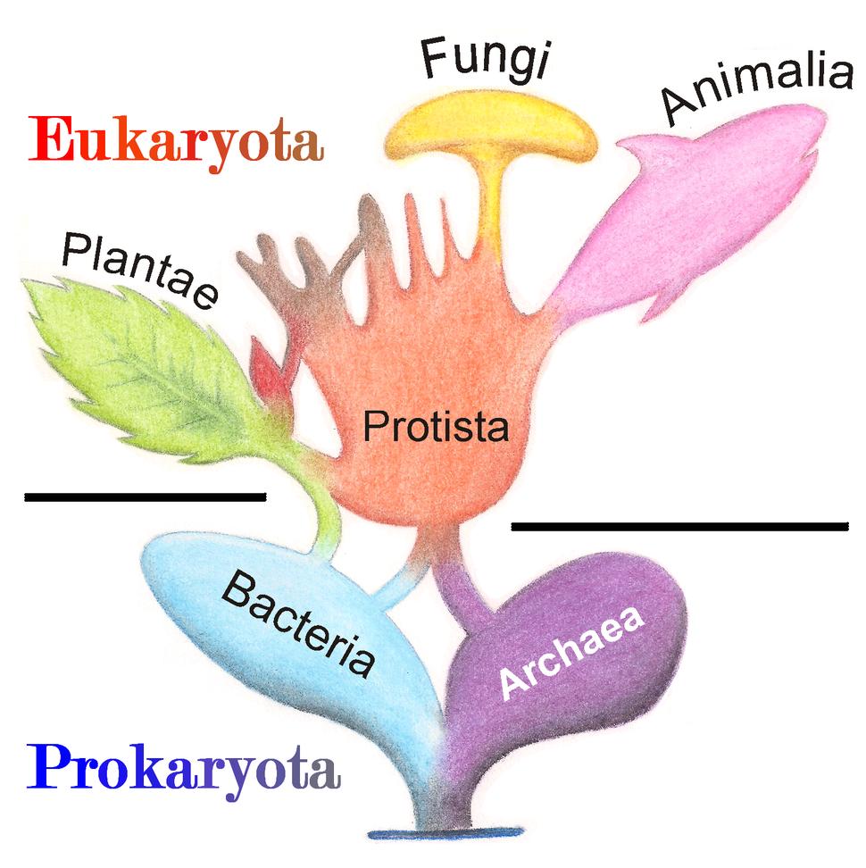 Tree of Living Organisms 2