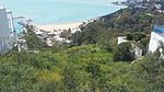 Trees in Tunis Sidi bou Said.jpg