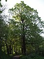 Trees near the River Lew - geograph.org.uk - 430456.jpg