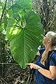 Tropisches Blatt, Ecuador.jpg