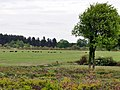 Troupeau de sangliers dans le domaine de Chambord (4604042828).jpg