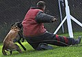 U.S. Air Force Senior Airman Shawn Witcher, assigned to the 673rd Security Forces Squadron, is dragged to the ground by Kimba, a military working dog, during a training session at Joint Base 130826-F-LX370-760.jpg