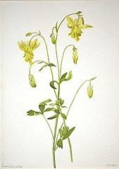Untitled--Plant Study