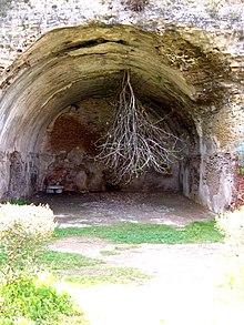 Tropismo - Wikipedia, la enciclopedia libre