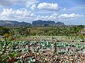 Vallée de Viñales-Finca agroecológica.jpg