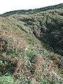 Valley below Druidston - geograph.org.uk - 1538470.jpg