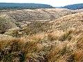 Valley of the Crook Burn - geograph.org.uk - 691744.jpg