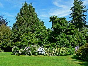VanDusen Botanical Garden - Image: Van Dusen Botanical Garden 4