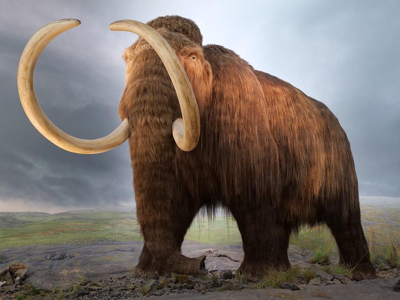 https://upload.wikimedia.org/wikipedia/commons/thumb/b/ba/Victoria.Mammut.P1033804.jpg/1280px-Victoria.Mammut.P1033804.jpg