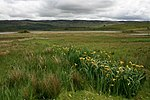 File:View Across the Low Lying Marshland to Càrn Mòr - geograph.org.uk - 454315.jpg