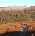 View north over bracken and woodland near Green Moor - geograph.org.uk - 667087.jpg
