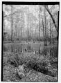 View of frog pond - Briarwood- The Caroline Dormon Nature Preserve, 216 Caroline Dormon Road, Saline, Bienville Parish, LA HALS LA-1-14.tif
