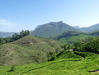 History of tea in India - View of tea plantations in Munnar