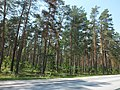 Views of Latvia DSCF4070 - Flickr - davispuh.jpg
