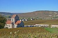 Vignoble-de-Champagne-à-Courthiézy-dans-la-vallée-de-la-Marne-DSC 0135.jpg