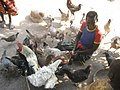 Village poultry 4 (4331880493).jpg
