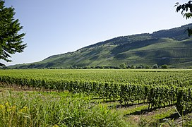 Vineyards Polich jun 2018 (2).jpg