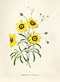 Vintage Flower illustration by Pierre-Joseph Redouté, digitally enhanced by rawpixel 69.jpg