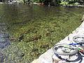 Vylet k Cernemu jezeru Sumava - 9.srpna 2010 125.JPG