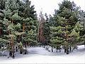 Vypolzovo, Ryazanskaya oblast', Russia, 391082 - panoramio - Andris Malygin.jpg