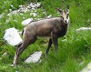 Vysoké Tatry, Dolina Bielej vody, cestou od Zeleného plesa na Jahňací štít (32)