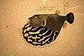 WLANL - Jung Mi - Japanese blowfish (fugu).jpg