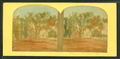 Washington elm, Cambridge, Mass, from Robert N. Dennis collection of stereoscopic views 5.png