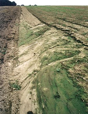 Surface runoff - Soil erosion by water on intensively-tilled farmland.