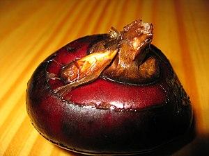 Eleocharis dulcis - Corm of Eleocharis dulcis