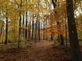 Watchung Reservation in the Fall 2013-11-05 01.jpg