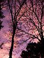Watercolors - panoramio.jpg