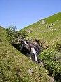 Waterfall, Wyth Burn - geograph.org.uk - 452284.jpg