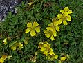 Whf yellow 15.jpg
