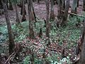 William B Clark Conservation Area Rossville TN 026.jpg