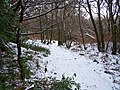 Winter in the woods - geograph.org.uk - 1150413.jpg
