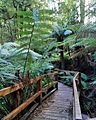 Wirrawilla Rainforest Walk.jpg