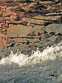 Wisconsin's Amnicon Falls State Park (2008).jpg