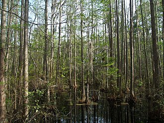 Woods Bay State Park - Image: Woods Bay State Park Swamp