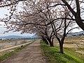 Yatsuomachi Nishijinzu, Toyama, Toyama Prefecture 939-2311, Japan - panoramio (29).jpg