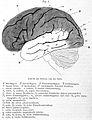 """""""Die Himwindungen des Menschen"""", 1869 Wellcome L0001034.jpg"""