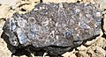 """Turritella Agate"" (chertified fossiliferous lacustrine limestone) (Laney Member, Green River Formation, Middle Eocene; North Barrel Springs Draw, south of Wamsutter, Wyoming, USA) 2 (25400772916).jpg"