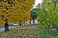 (((پاییز در مراغه ))) - panoramio.jpg