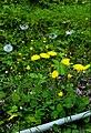 (((گلهای بهاری))) - panoramio.jpg
