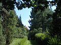 Аллея в дендропарке - panoramio.jpg