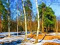 Апрель в Кузьминском парке, м.Кузьминки. Moscow, Russia - panoramio - Oleg Yu.Novikov (20).jpg