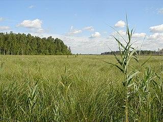 Rivne Nature Reserve