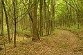 Бритавський ліс 01.jpg